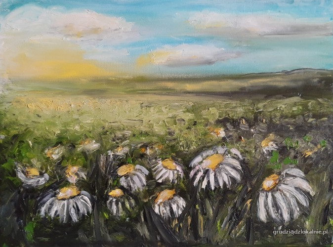 Kwiaty polne – Rumianki