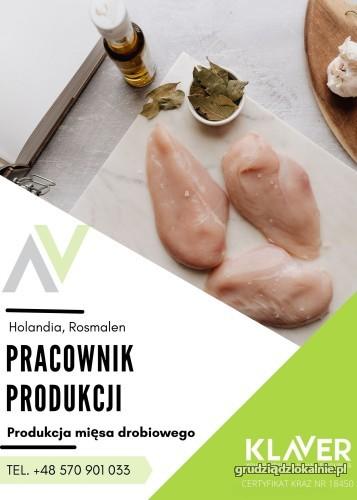 Produkcji i pakowaniu mięsa drobiowego praca w Holandii